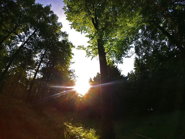 Sun, Back Light, Nature, Silhouettes, Trees, Setting