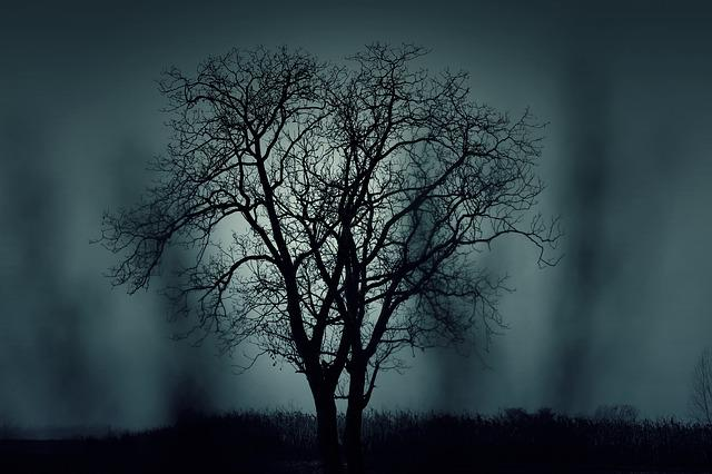 Trees, Silhouettes, Mysterious, Halloween, Dark, Nature