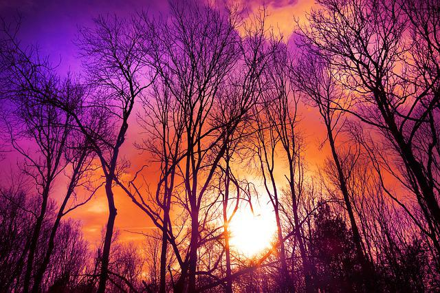 Trees, Wood, Bare Trees, Branches, Silhouettes