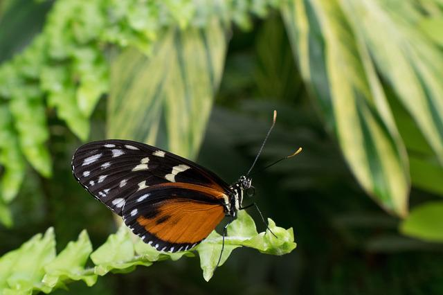 Butterfly, Macro, Insect, Nature, Silk, Butterfly Wings