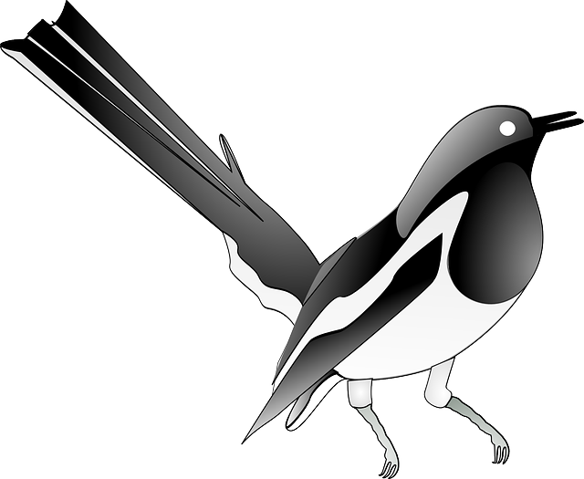 Magpie, Songbird, Bird, Song, Melody, Singing Bird
