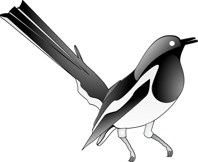 Magpie, Songbird, Bird, Song, Melody, Singing Bird