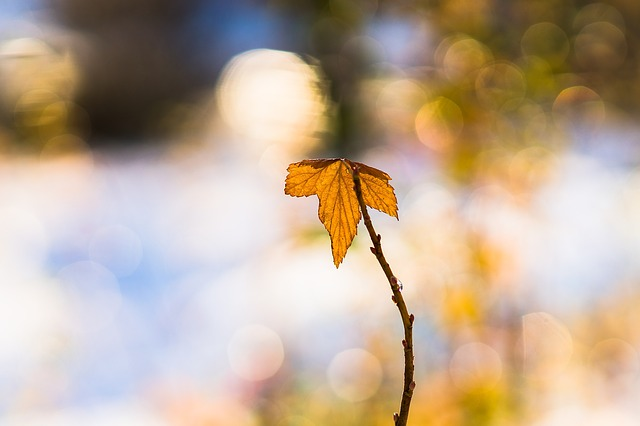 Leaf, Winter, Golden, Orange, Alone, Single, Lonely