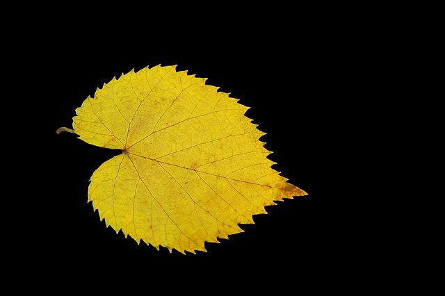 Yellow Leaf, Gold, Feather, Lipa, Single, Model
