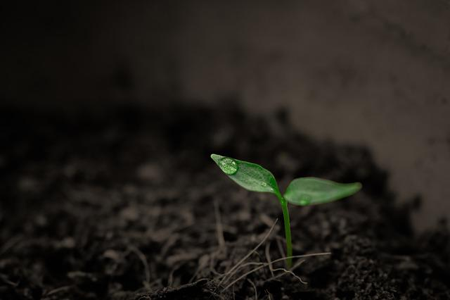 Green, Grow, Grow Up, Plant, Rain, Single, Singular