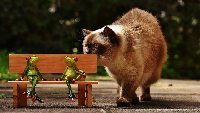 Friends, Sit, Frogs, Bank, Cat, Curious, Bench, Rest