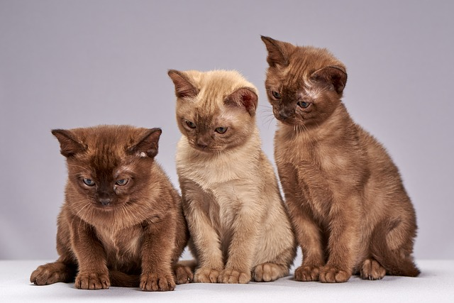 Cute, Little, Sit, Animals, Kittens, Kitten, Cat