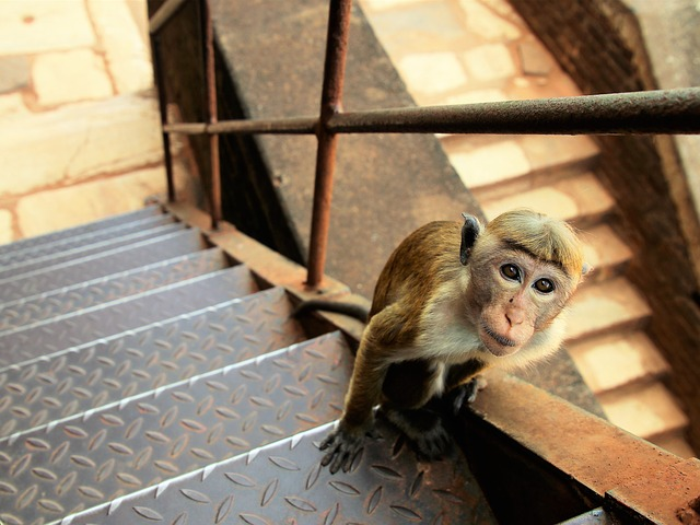 Stairs, Charming, Sit, Portrait, Mammals, Animals, Rudy