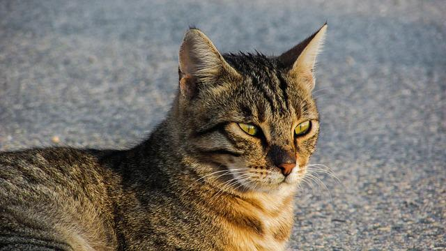 Cat, Stray, Animal, Street, Sitting, Relax, Look
