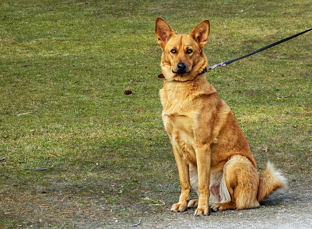 Dog, Animal, Mammal, Canine, Pet, Domestic, Sitting