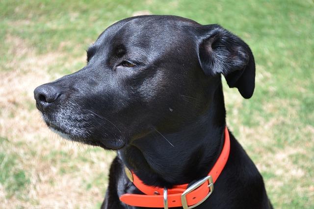 Dog, Black Dog, Pet, Cute, Portrait, Sitting, Black