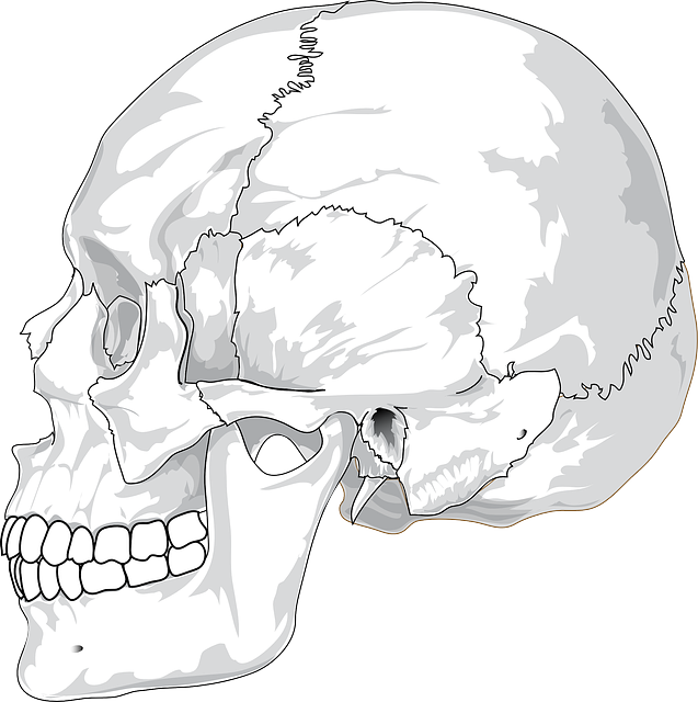 Skull, Cracked, Head, Skeleton, Side, Skeletal