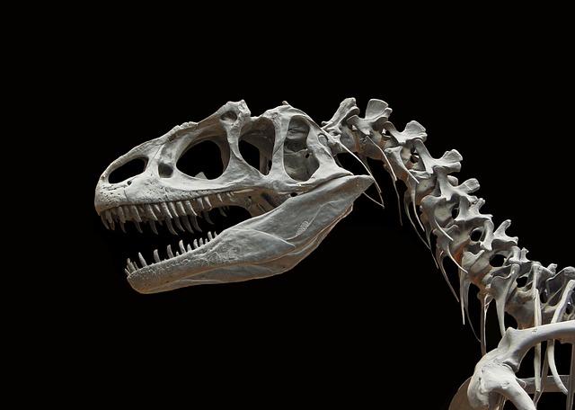 Dinosaur, Allosaurus, Skeleton, Bone, Prehistoric Times