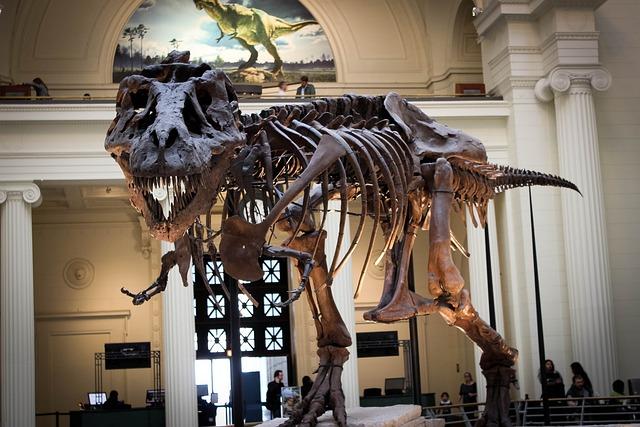 Dinosaur, Tree, Museum, Dino, Tyrannosaur, Skeleton