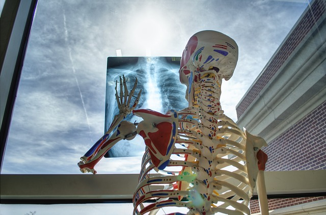 Skeleton, Medical, Technology, Medicine, Tools, X-ray