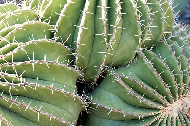 Plant, Wild, Nature, Thorny, Skewers, Cactus