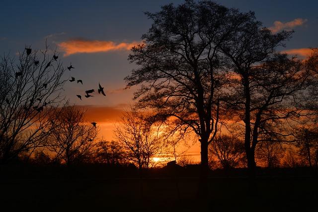 Sunrise, Morgenrot, Skies, Bird, Atmospheric, Orange