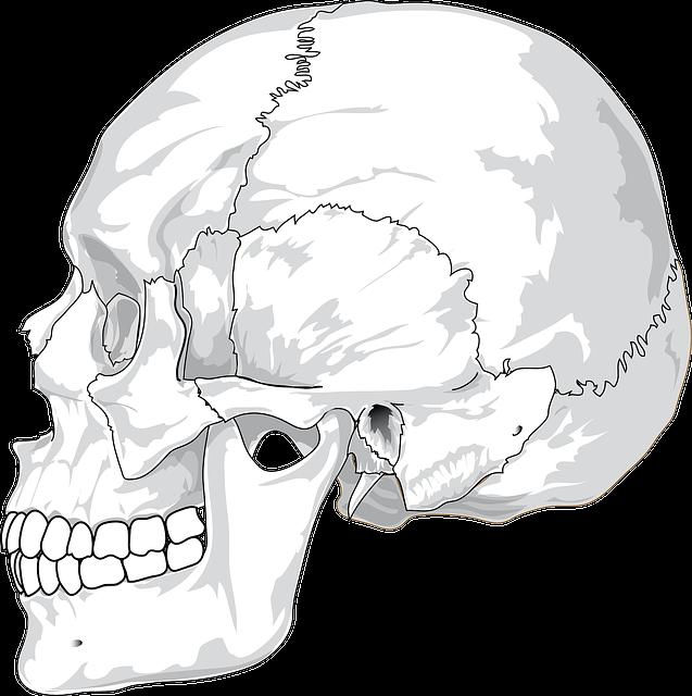 Skull, Cracked, Head, Skeleton, Side, Skeletal