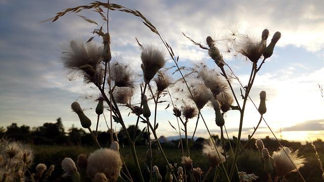 Herbs, Thistles, Sky, Clouds, Summer, Alsace