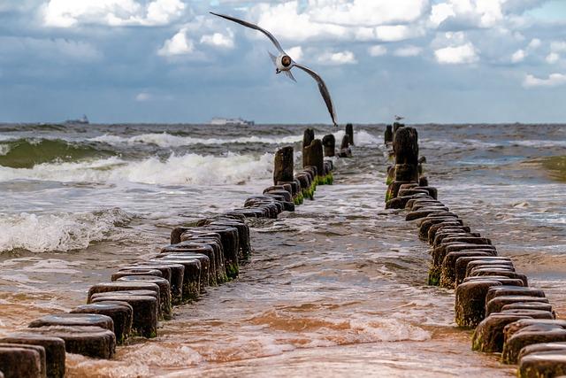 Seagull, Nature, Animal, Bird, Wing, Flight, Sky