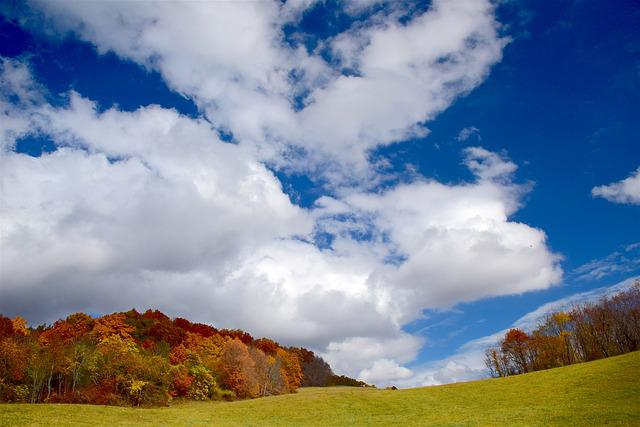 Autumn, Foliage, Sky, Landscape, Forest, Tree, Grass