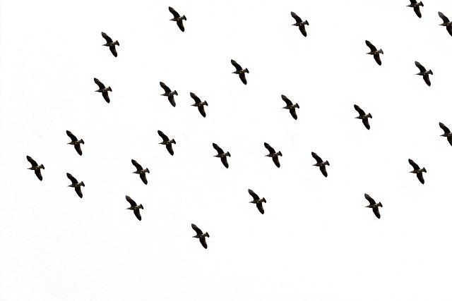 Bird, Sky, Flight, Bird Flight, In Flight, Freedom