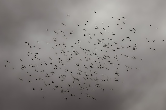 Birds, Flock, Nature, Sky, Winter, Wildlife, Silhouette