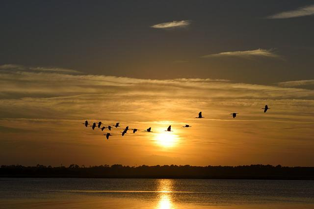 Sunset, Florida, Birds, Avian, Herons Flying, Sky