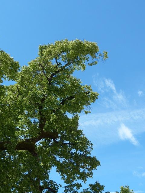 Tree, Branch, Sky, Green, Blue, Summer, Summer Resort