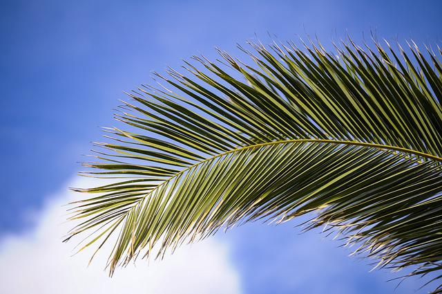 James, Plant, Branches, Palm, Branch, Tropical, Sky