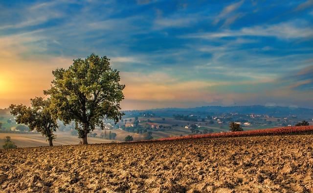 Trees, Campaign, Crops, Soil, Sky, Clouds, Landscape