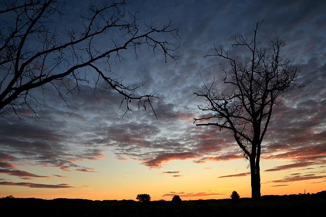 Sunset, Canal Du Midi, Nature, Trees, Twilight, Sky