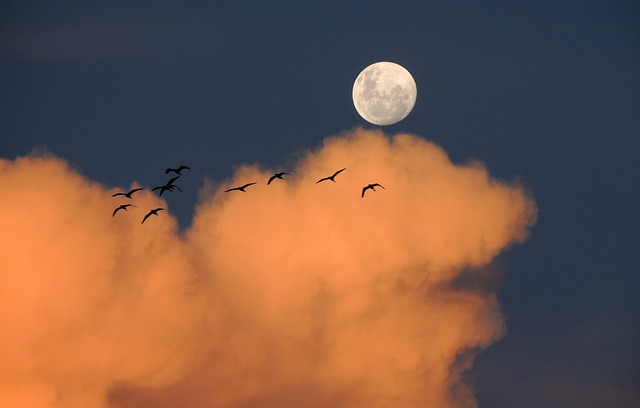 Moon, Sky, Clouds, Day, Birds, Of Day