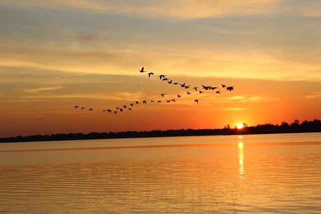 Sunset, Dawn, Water, Dusk, Sun, Sky, Lake, Beach