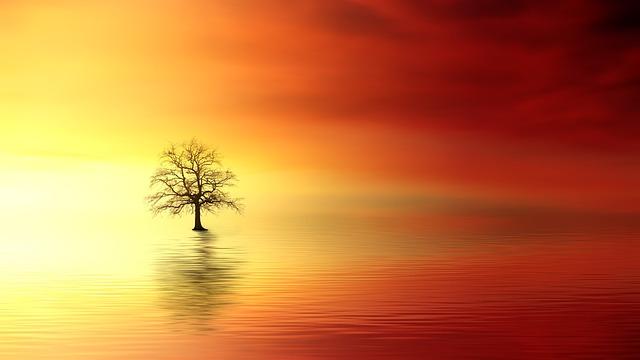 Sunset, Tree, Dawn, Sun, Nature, Dusk, Evening, Sky
