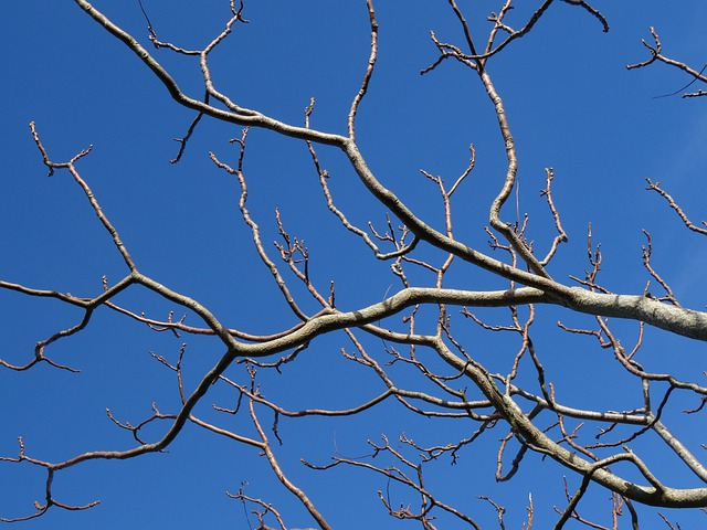 Sky, Tree, Organic, Agriculture, Outdoors, Environment