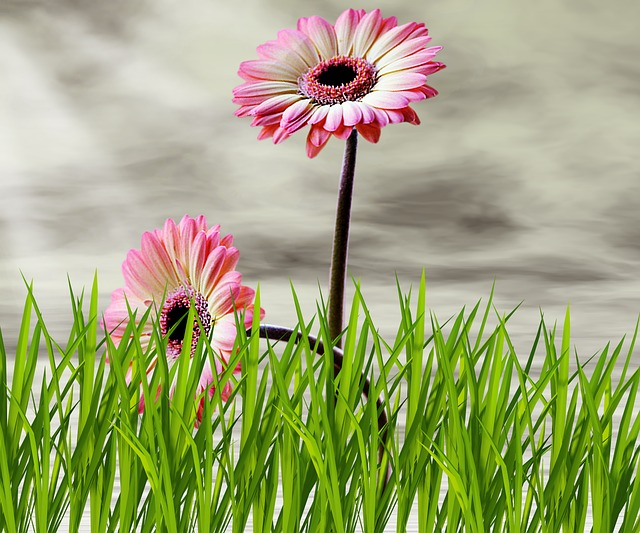 Plant, Flower, Lawn, Nature, Summer, Flowers, Sky