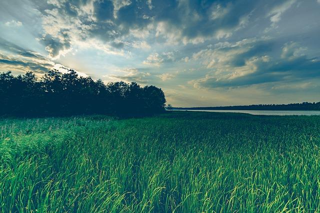 Sky, Clouds, Summer, Nature, Landscape, Green, Grass