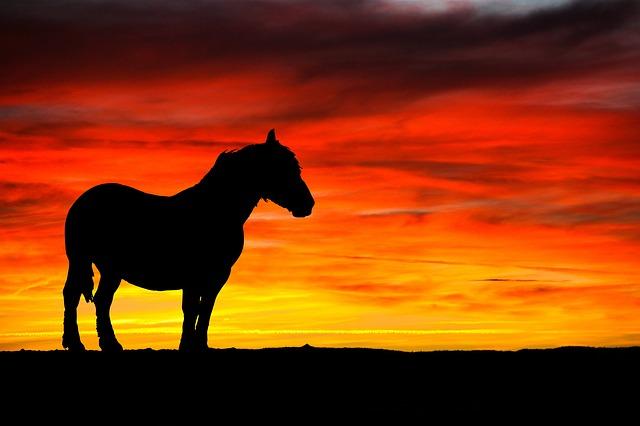 Horse, Silhouette, Black, Sunset, Nature, Sky, Orange