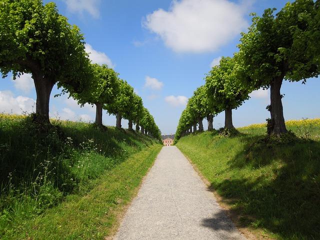 Avenue, Summer, Trees, Away, Sky, Landscape, Romantic
