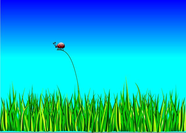 Ladybug, Bug, Grass, Landscape, Sky, Nature, Animal