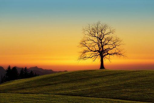 Tree, Sunset, Nature, Dawn, Landscape, Sky, Evening
