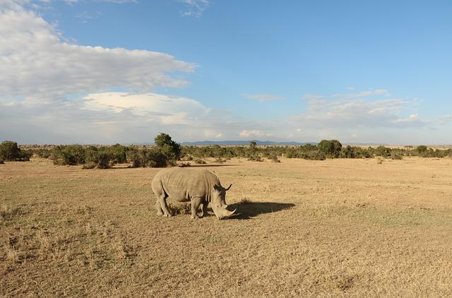 Nature, Dry, Desert, Sky, Landscape, Safari, Outdoors