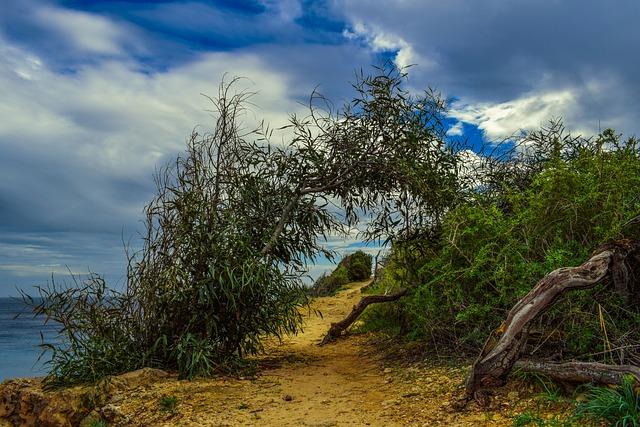 Path, Nature, Trees, Seashore, Landscape, Sky, Clouds