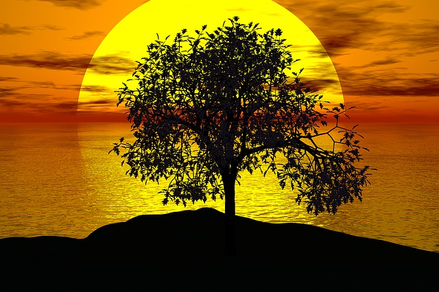 Tree, Sunset, Sun, Landscape, Nature, Sky