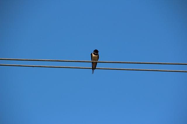 Bird, Schwalbe, Sky, Nature, Lines, Blue, Barn Swallow