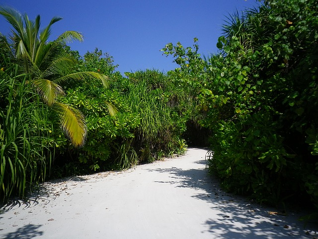 Sand Road, Palm, Plant, Sky, Color, Maldives