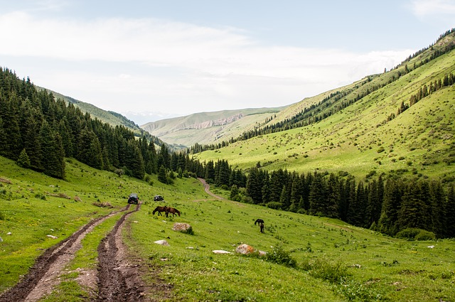 Mountains, Sky, Summer, Animals, Horses, Forest, Efi