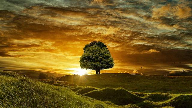 Landscape, Beautiful, Nature, Forest, Sky, Sunset