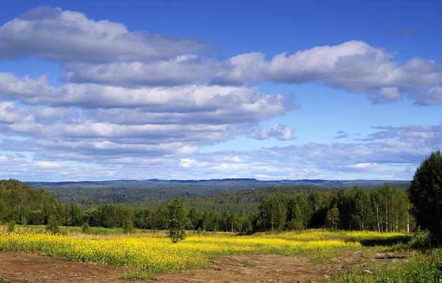 Field, Sky, Nature, Forest, Summer, Landscape, Clouds